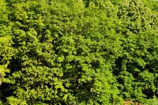 Free Forest, Bright Green Leaves Royalty Free Stock Images - 5675289