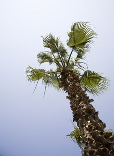 Free Palm Tree Stock Photography - 5676052