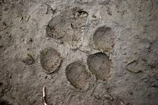 Beast Footmark Royalty Free Stock Image