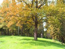 Free Landscape, Autumn Forest Stock Photos - 5677263