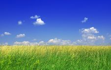 Free Green Grass And Blue Sky Royalty Free Stock Photography - 5677487