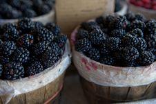 Free Fresh Juicy Blackberries Stock Photography - 5677912