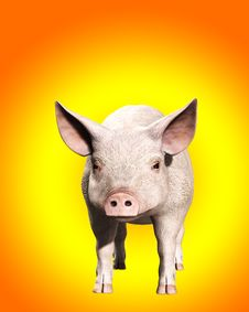Free A Pink Pig 2 Stock Images - 5677934