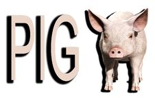 Free A Pink Pig 4 Royalty Free Stock Image - 5677946