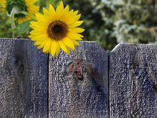 Summer Sunshine Stock Photo
