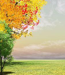 Free Autumn Trees Stock Photo - 5678890