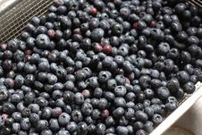 Free Blueberries Royalty Free Stock Images - 5679179