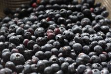 Free Blueberries Stock Image - 5679441