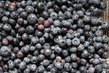 Free Blueberries Stock Image - 5679451