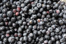 Free Blueberries Royalty Free Stock Images - 5679459