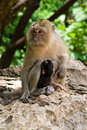 Free Monkey With Baby Royalty Free Stock Photos - 5682438