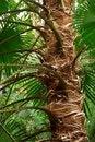 Free Spiky Tree Trunk Royalty Free Stock Photos - 5684638
