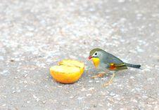 Free Bird Stock Photos - 5681333