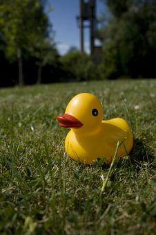 Free Duck Stock Photo - 5681340