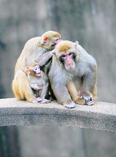 Free Monkey Stock Images - 5681654