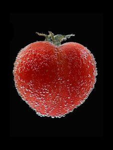 Free Tomato Stock Photos - 5682173
