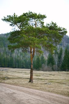 Free Alone Tree Royalty Free Stock Images - 5682249