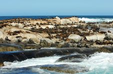 Free Fur Seals Stock Images - 5682374