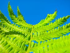 Free Close Up Fern Royalty Free Stock Image - 5682596