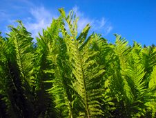 Free Fern Stock Photos - 5682603