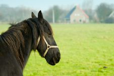 Free Beautiful Horse Stock Images - 5683624