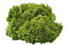 Free Green Lettuce Royalty Free Stock Photography - 5684067