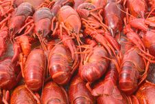 Free Crayfish Cooked Stock Images - 5684084