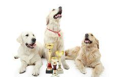 Free Puppies Royalty Free Stock Photo - 5684565