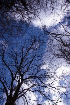 Free Sky Through Trees 2 Stock Photography - 5685692