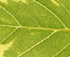 Free Green Leaf Texture Stock Photography - 5685972