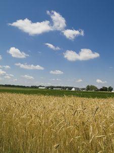 Free Farming Royalty Free Stock Image - 5686226