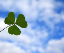 Free Clover Stock Photos - 5687523