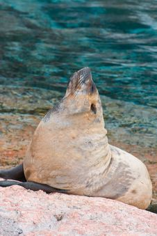 Free Lazy Seal Stock Images - 5687654