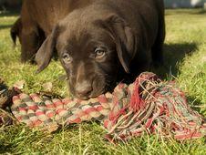 Free Puppy Stock Image - 5687761
