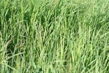 Free Green Grass Stock Photography - 5687932