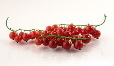 Free Red Currant Royalty Free Stock Photography - 5688567