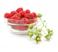 Free Red Raspberry Fruits In Glass Vase Royalty Free Stock Photos - 5689038