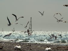 The Windsurfer & The Seagulls Stock Photos