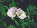Free A Couple Of Beautiful Pink Loach Beautifully Grow Stock Photography - 56847852