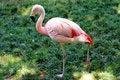 Free Flamingo Royalty Free Stock Photography - 5691837