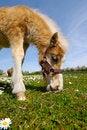 Free Foal Stock Photo - 5693120