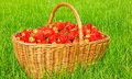 Free Strawberry In The Basket Stock Photography - 5694442