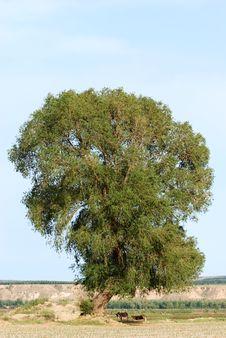 Free Tree Royalty Free Stock Image - 5691206