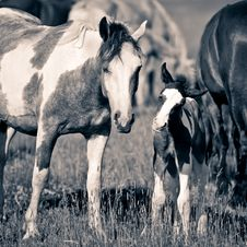 Free Little Foal And Mare Royalty Free Stock Photo - 5691655