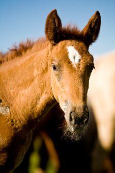 Free Horse Stock Image - 5691671