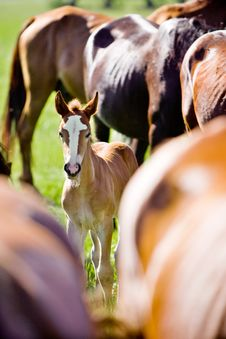 Free Little Foal Royalty Free Stock Photo - 5691675