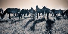 Free Horde Of Horses Feeding Stock Photos - 5691753