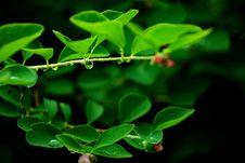 Free Leaf 1 Stock Photo - 5691910