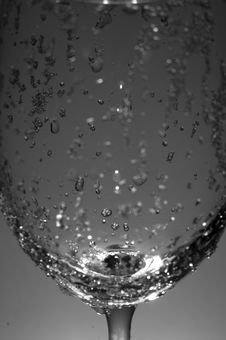 Free Wineglass Stock Photography - 5692202
