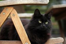 Free Black Cat Royalty Free Stock Photos - 5692238